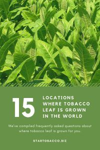 where-tobacco-leaf-is-grown
