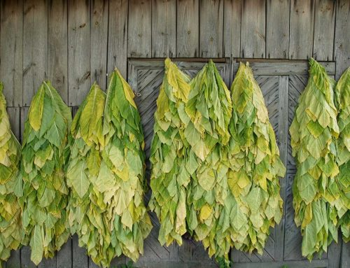 How To Pick A Wholesale Oriental Tobacco Supplier